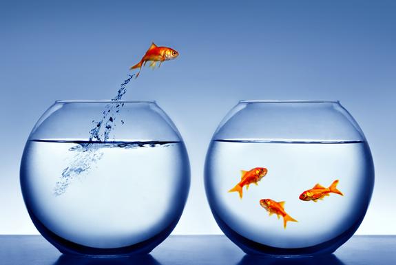 Normal i1 fish